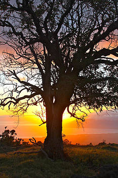 Venetia Featherstone-Witty - Sunset Tree Maui