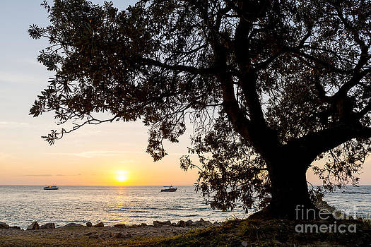 Tim Hester - Sunset Tree