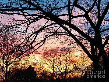 Judy Via-Wolff - Sunset Under the Dogwoods