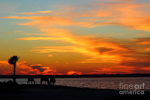 Sunset with Horses by Andre Turner