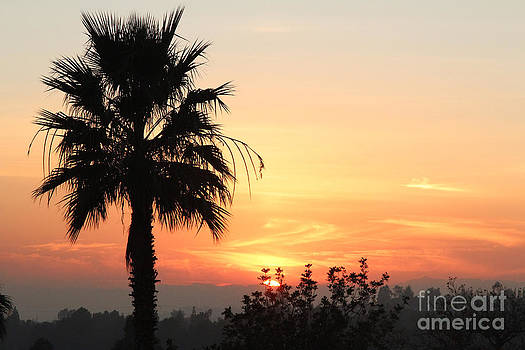 Sunset with Palm Tree Silhouette by Nina Prommer