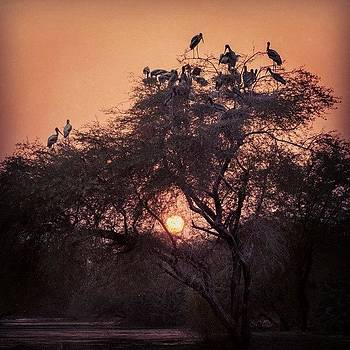 Sunset With Storks by Hitendra SINKAR