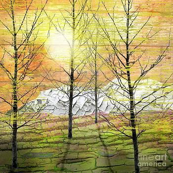 Sunset Wood  by Sharon Marcella Marston
