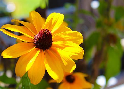 Sunshine Blossom by Shaileen Landsberg