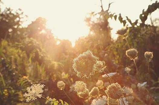 Sunshine Daydream by Lori Peterson