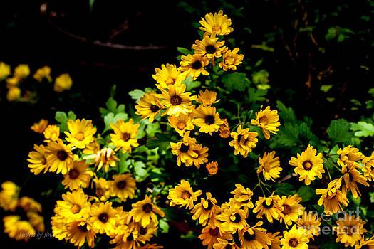Sunshine Flowers  by Jinx Farmer