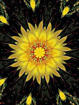 Nick Heap - Sunshine Lily
