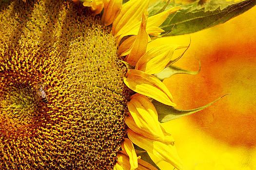 Sunshine by Margaret Hormann Bfa