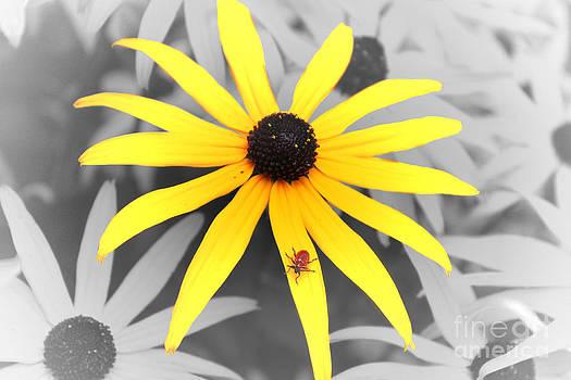 Sunshine Susie by Cathy  Beharriell