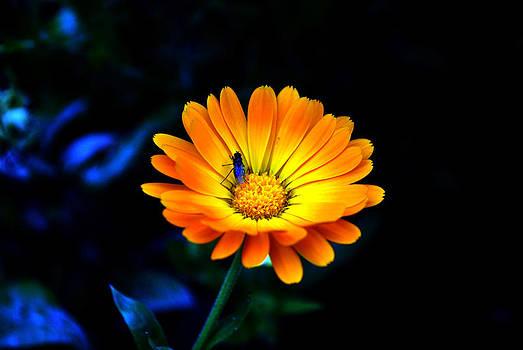 Sunshine- Viator's Agonism by Vijinder Singh