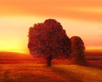Suntree by John Townes