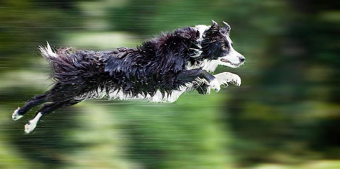 Super Dog by Robert Hainer