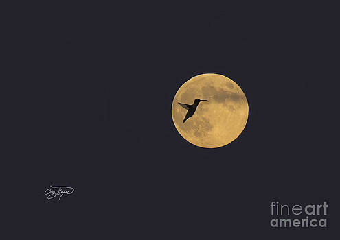 Super Harvest Moon by Cris Hayes