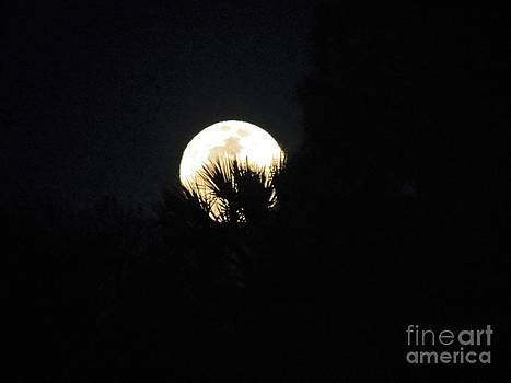 Super Moon by Fortunate Findings Shirley Dickerson