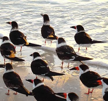 Surf Birds by Van Ness