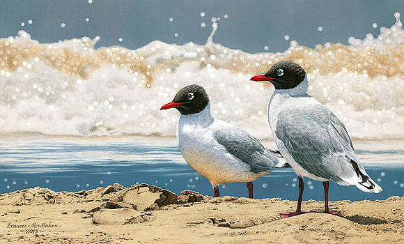 Surf 'n' Turf - Franklin's Gulls by Frances McMahon