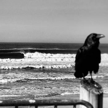 #surfcrow by Matt Proehl