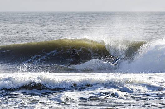 Surfer and Bird Winter Belmar NJ by Maureen E Ritter