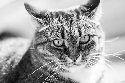 Hakon Soreide - Surprised Cat