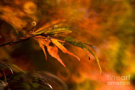 Angel  Tarantella - surprised leaf
