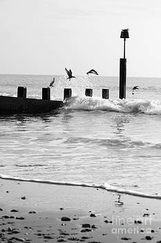 Anne Gilbert - Surprised Seagulls