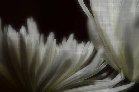 Surrender by Tara Miller