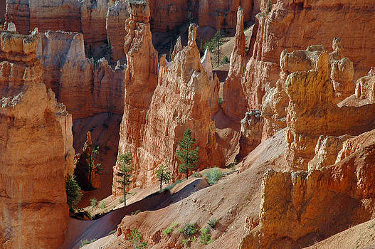Survival of the Trees in Bryce Canyon by Bruce Gourley
