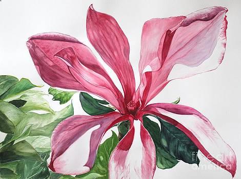 Susan Magnolia by Kyong Burke