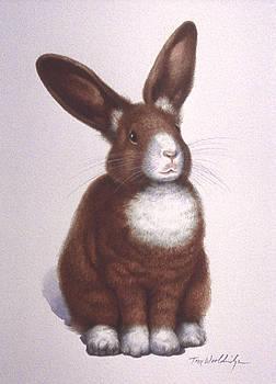 Susan's Bunny by Tom Wooldridge