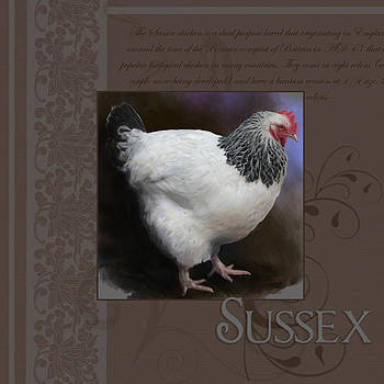 Sussex Hen by Bethany Caskey