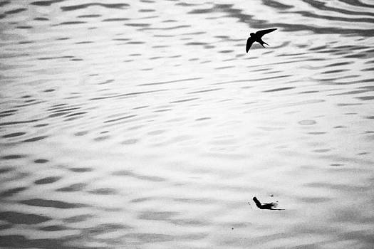 Swallow In Sunset by Goyo Ambrosio