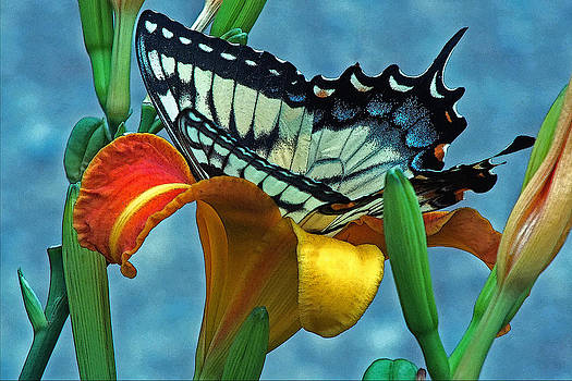 Swallowtail and Tiger lily by William Walker