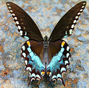 Swallowtail Beauty by Candice Trimble