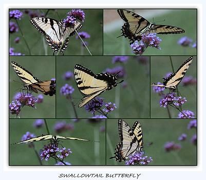 Rosanne Jordan - Swallowtail Butterfly Collage