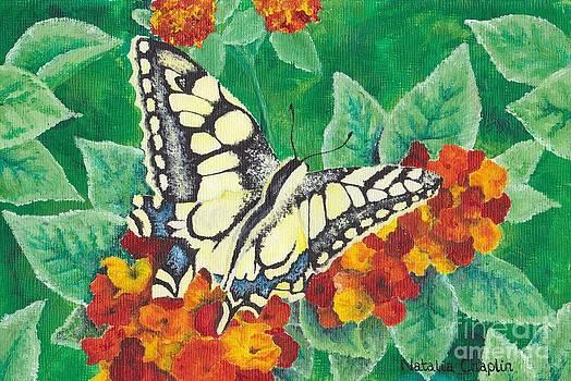 Swallowtail Butterfly by Natalia Chaplin