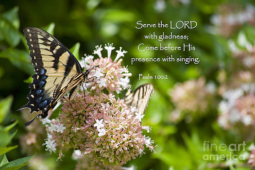 Jill Lang - Swallowtail Butterfly on Chinese Abelia with Scripture