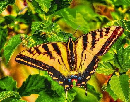 Swallowtail by Larry Bodinson