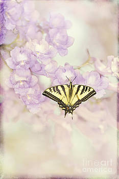 Susan Gary - Swallowtail on Jacaranda Blossoms