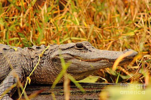 Swamp Gator by Andre Turner