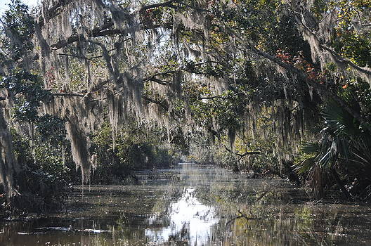 Swamp by Paul Van Baardwijk