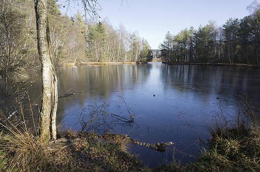 Swamp Schwenninger Moos by Matthias Hauser
