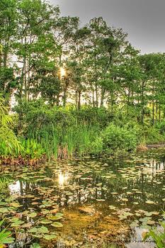 Swamp Sunrise by Vanessa Parent