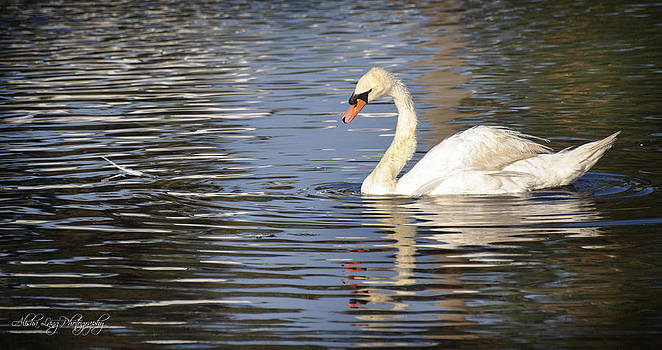 Swan and her drifting feather by Alisha Lang
