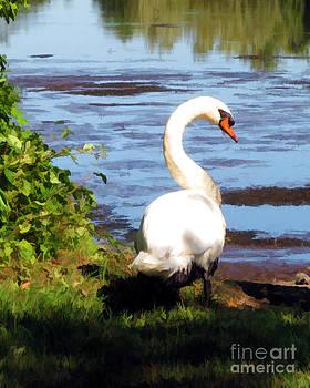 Anne Ferguson - Swan