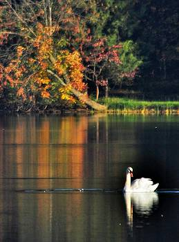 Swan At Dawn by Mary Frances