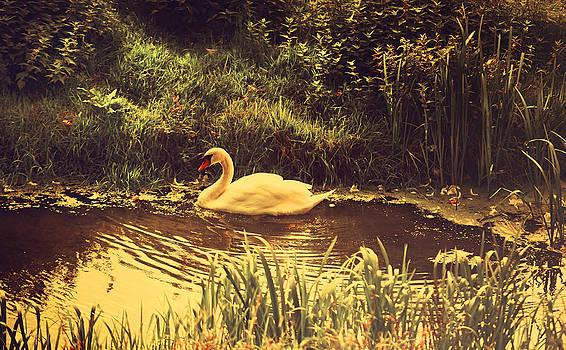 Jenny Rainbow - Swan at the Golden Lake