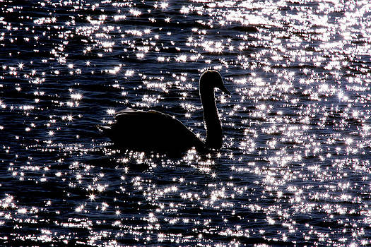 Dawn J Benko - Swan Bay