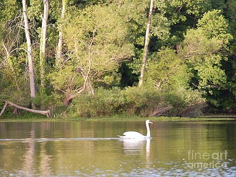 Swan by Bill Dinkins