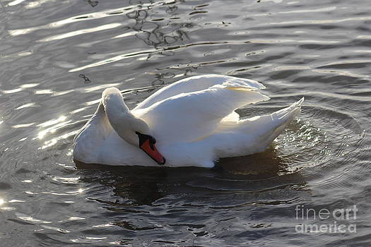 Swan by the Lake # 2 by Jeanette Rode Dybdahl