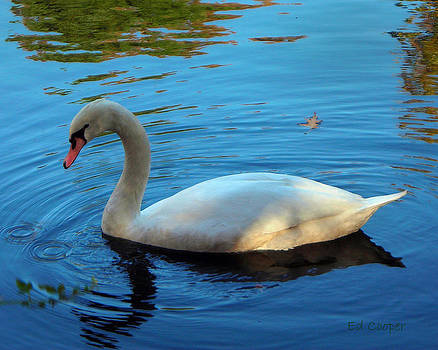 Swan by Ed Cooper